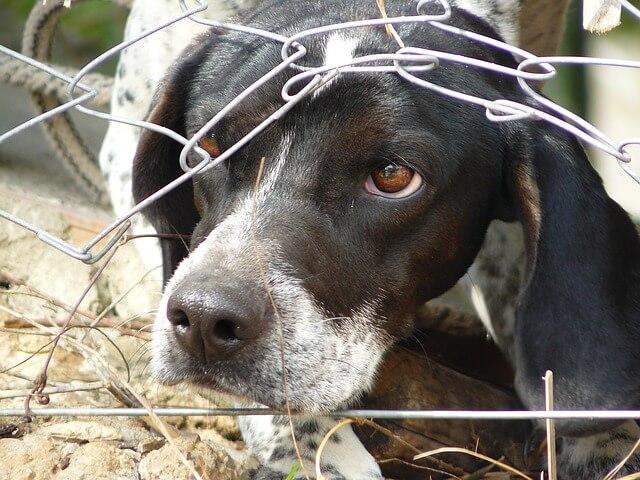Els gossos també son utilitzats per provar productes cosmetics